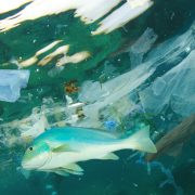 pollution plastique océan